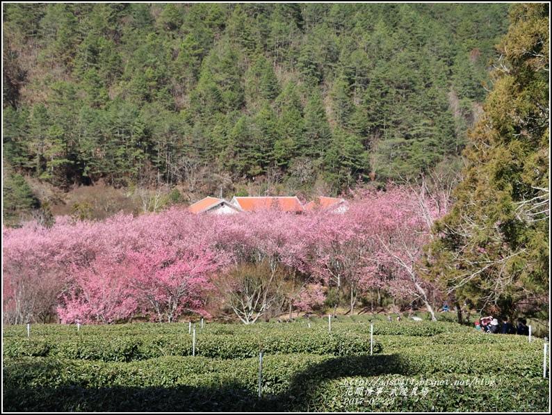 武陵農場巡櫻-2017-02-60.jpg