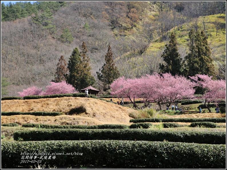 武陵農場巡櫻-2017-02-78.jpg