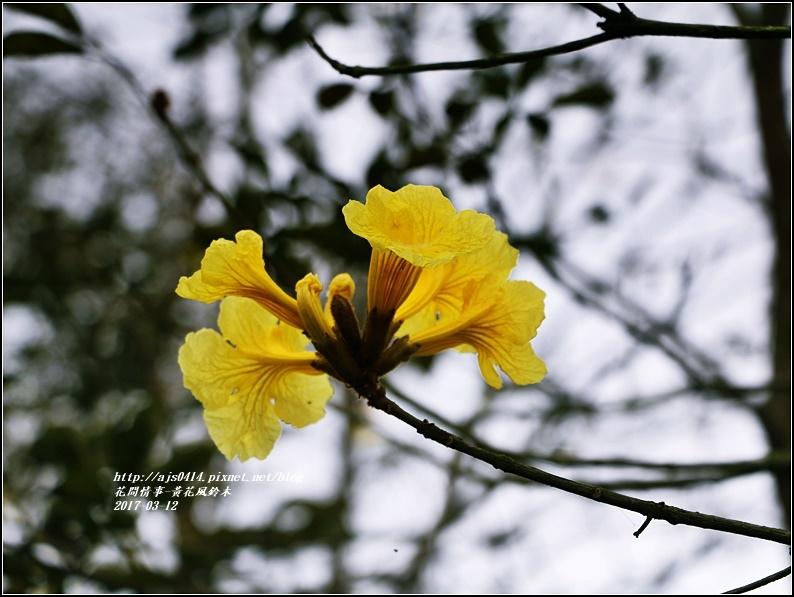 黃花風鈴木(富源國中旁)-2017-03-04.jpg
