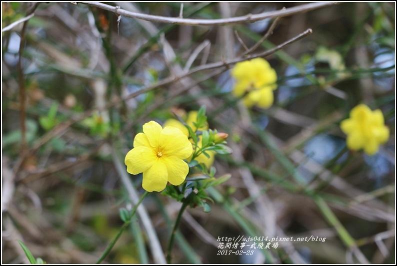 武陵農場雲南黃馨-2017-02-04.jpg