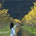 黃花風鈴木(富源國中旁)-2017-03-36.jpg