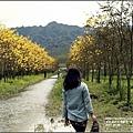 黃花風鈴木(富源國中旁)-2017-03-55.jpg