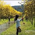 黃花風鈴木(富源國中旁)-2017-03-57.jpg