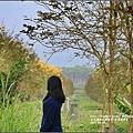 黃花風鈴木(富源國中旁)-2017-03-67.jpg