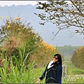 黃花風鈴木(富源國中旁)-2017-03-68.jpg