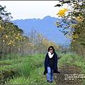 黃花風鈴木(富源國中旁)-2017-03-69.jpg