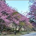 武陵農場巡櫻-2017-02-99.jpg
