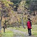 武陵農場巡櫻-2017-02-143.jpg