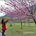 武陵農場巡櫻-2017-02-149.jpg