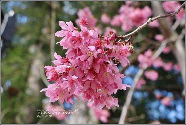 武陵農場巡櫻-2017-02-160.jpg
