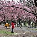 武陵農場巡櫻-2017-02-187.jpg