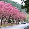 武陵農場巡櫻-2017-02-190.jpg