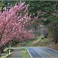 武陵農場巡櫻-2017-02-193.jpg