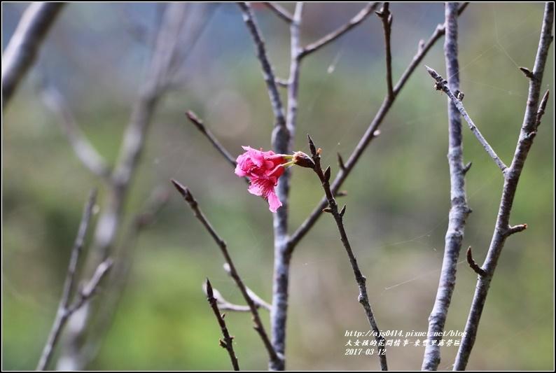 東豐露營區-2017-03-24.jpg