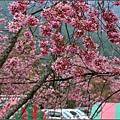 武陵農場-2017-02-290.jpg