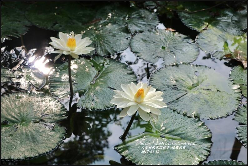 綠窩民宿-2017-03-15.jpg