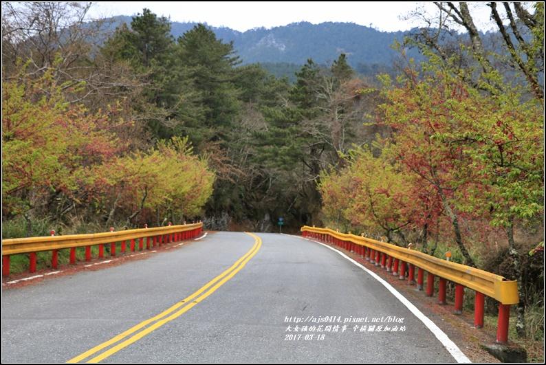 中橫公路-2017-03-05.jpg