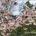 中橫公路吉野櫻-2017-03-01.jpg