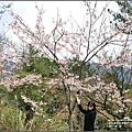 中橫公路吉野櫻-2017-03-02.jpg