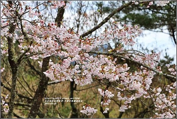 中橫公路吉野櫻-2017-03-04.jpg