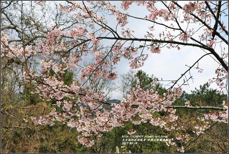 中橫公路吉野櫻-2017-03-05.jpg