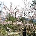 中橫公路吉野櫻-2017-03-06.jpg