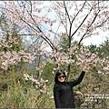 中橫公路吉野櫻-2017-03-07.jpg