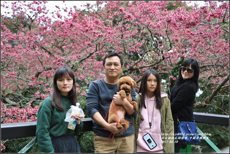 中橫碧綠神木-2017-03-14.jpg