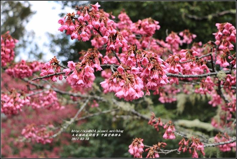 中橫碧綠神木-2017-03-16.jpg