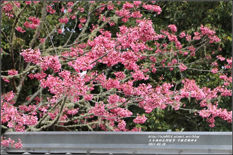 中橫碧綠神木-2017-03-17.jpg