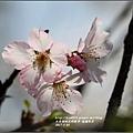 瑞穗街景-2017-04-09.jpg