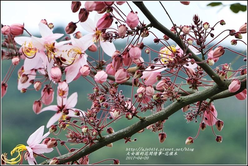 花旗木(桃紅陣雨樹)-2017-04-03.jpg