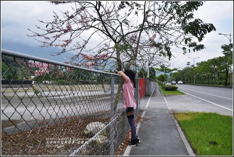 花旗木(桃紅陣雨樹)-2017-04-10.jpg