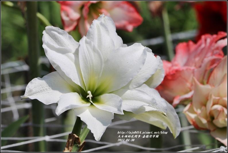 嘉德萱草園-2017-04-13.jpg