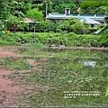 柳池生態園區-2017-05-19.jpg