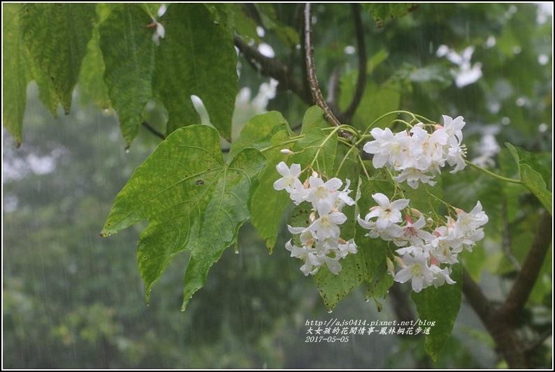 鳳林桐花步道-2017-05-09.jpg