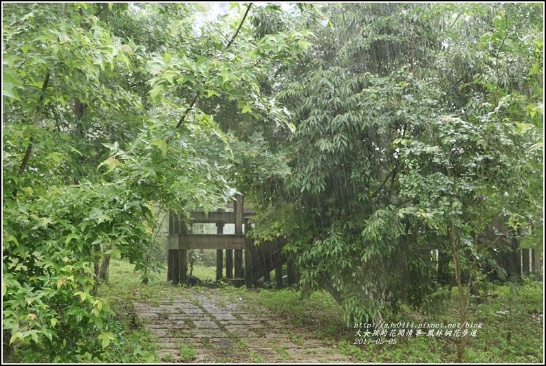 鳳林桐花步道-2017-05-11.jpg