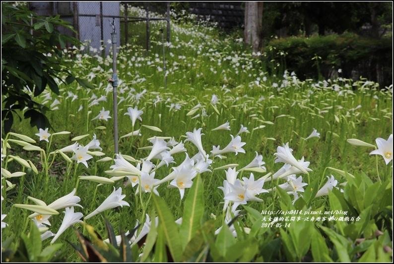 鐵炮百合花(秀姑巒溪泛舟中心)2017-05-03.jpg