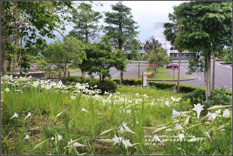 鐵炮百合花(秀姑巒溪泛舟中心)2017-05-10.jpg