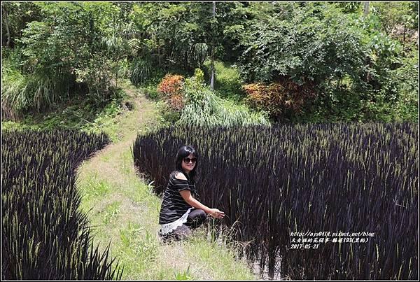 黑稻(縣道193)-2017-05-01.jpg