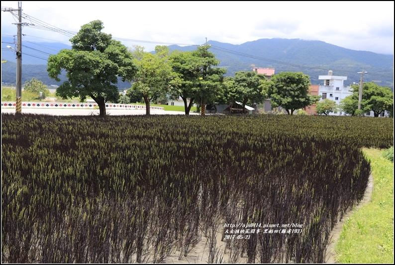 黑稻(縣道193)-2017-05-10.jpg