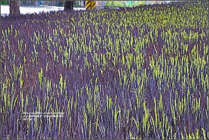 黑稻(縣道193)-2017-05-13.jpg