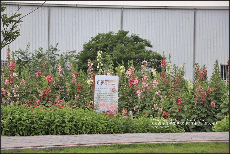 蜀葵(花蓮十六股大道)-2017-05-24.jpg
