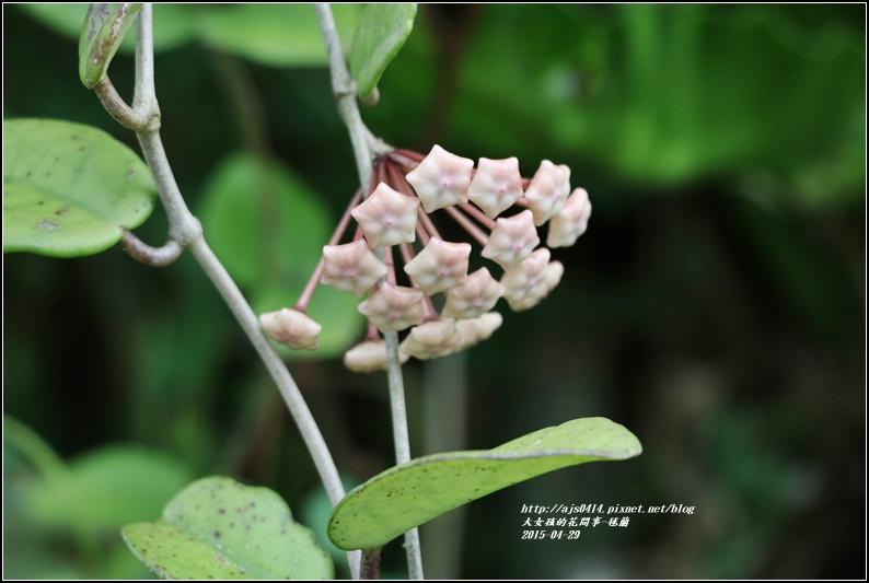 毬蘭-2017-05-07.jpg