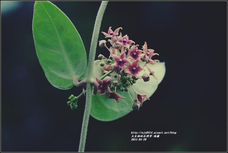 毬蘭-2017-05-08.jpg