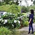 赤柯山繡球花-2017-05-08.jpg