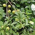 赤柯山5月遊-2017-05-13.jpg