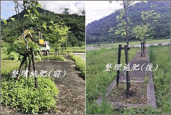 花旗木停車場.jpg