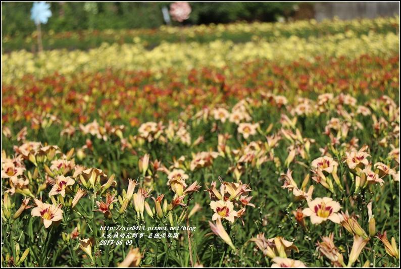 嘉德萱草園-2017-06-16.jpg