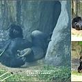 木柵動物園-2017-07-09.jpg